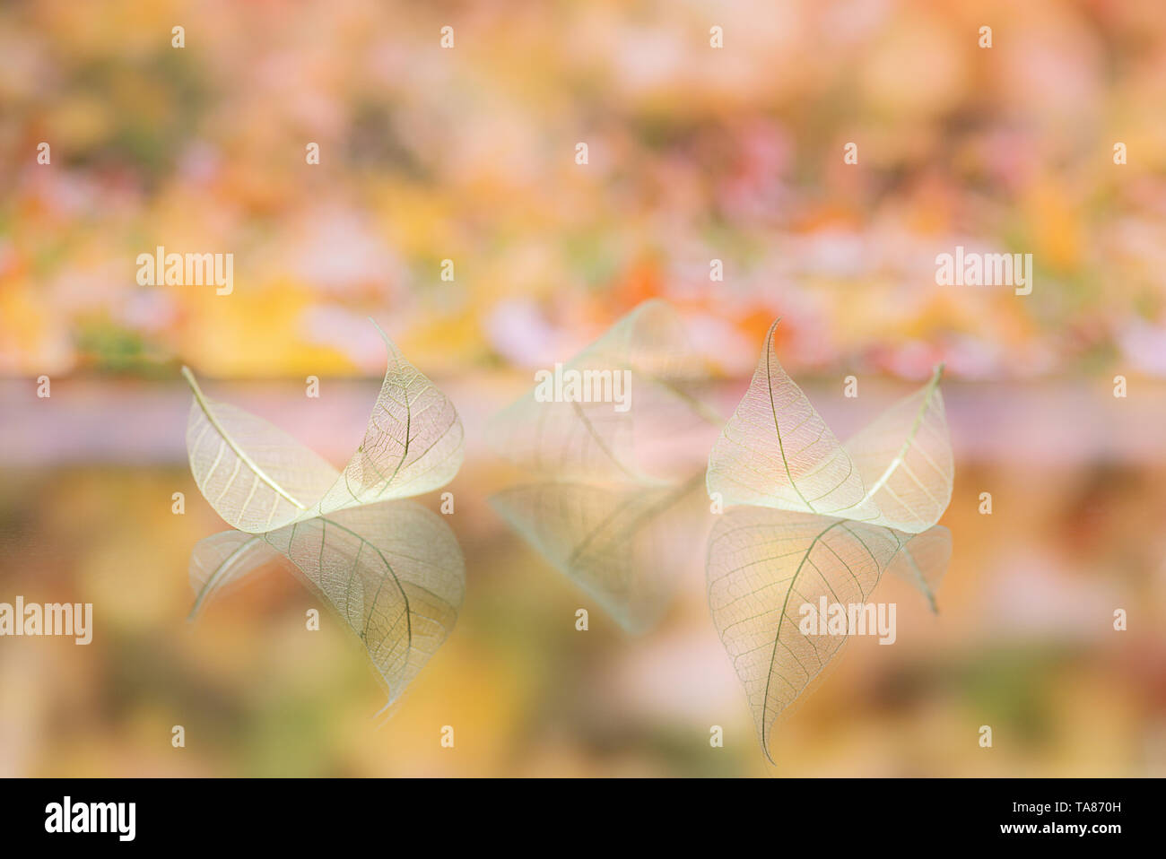 Transparent white leaves are on mirror surface with reflection on yellow-orange background, abstract macro with bokeh. Artistic image of ship in lake  - Stock Image