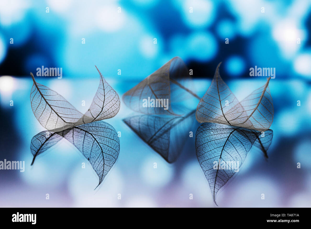 Transparent white leaves are on mirror surface with reflection on dark-blue background, abstract macro with bokeh. Artistic image of ship in lake wate - Stock Image