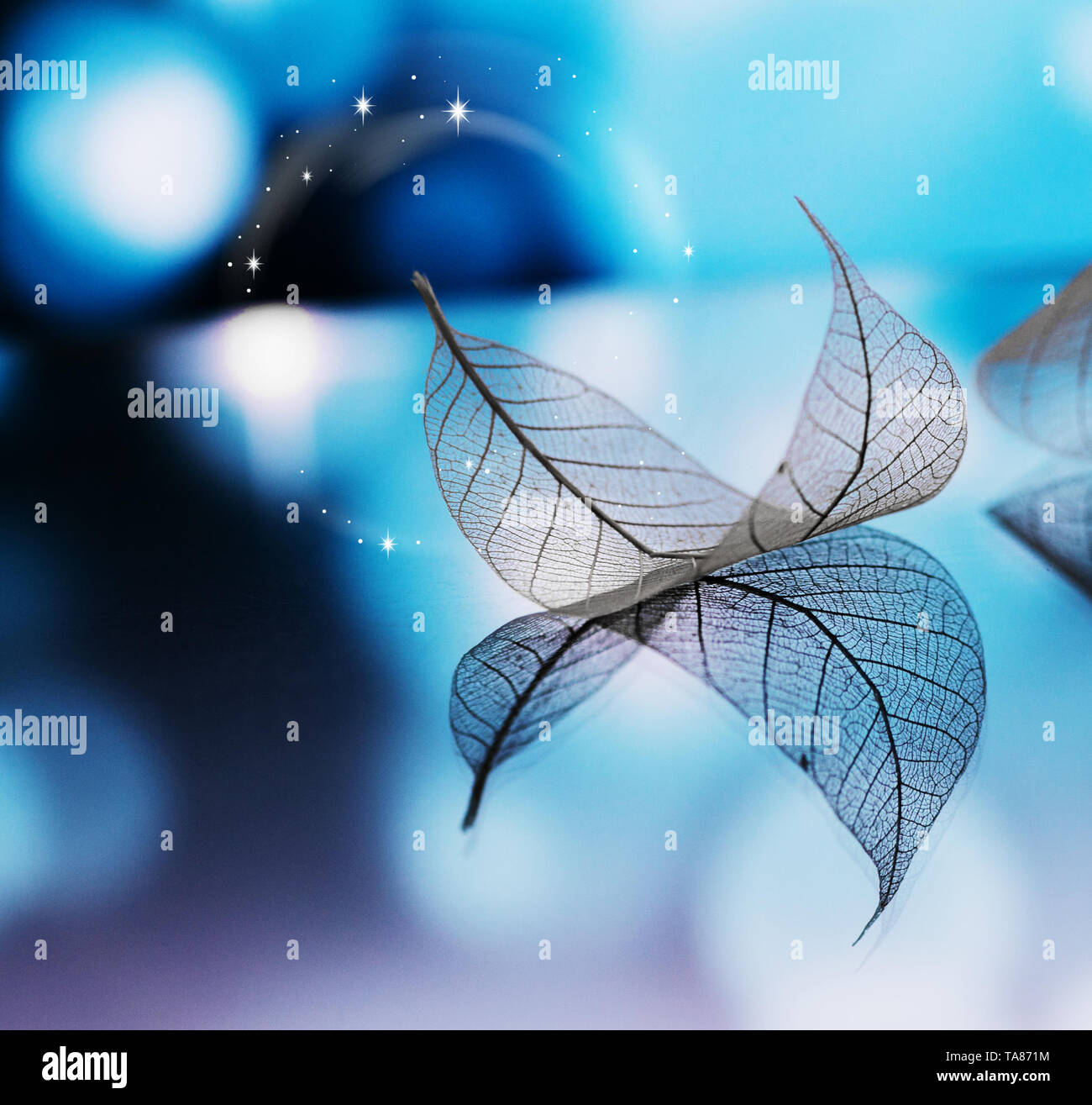 Transparent white leaf are on mirror surface with reflection on dark-blue background, abstract macro with bokeh. Artistic image of ship in lake waters - Stock Image