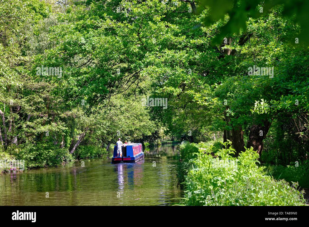 A narrow boat cruising on the River Wey navigation canal on a summers day, Byfleet Surrey England UK - Stock Image