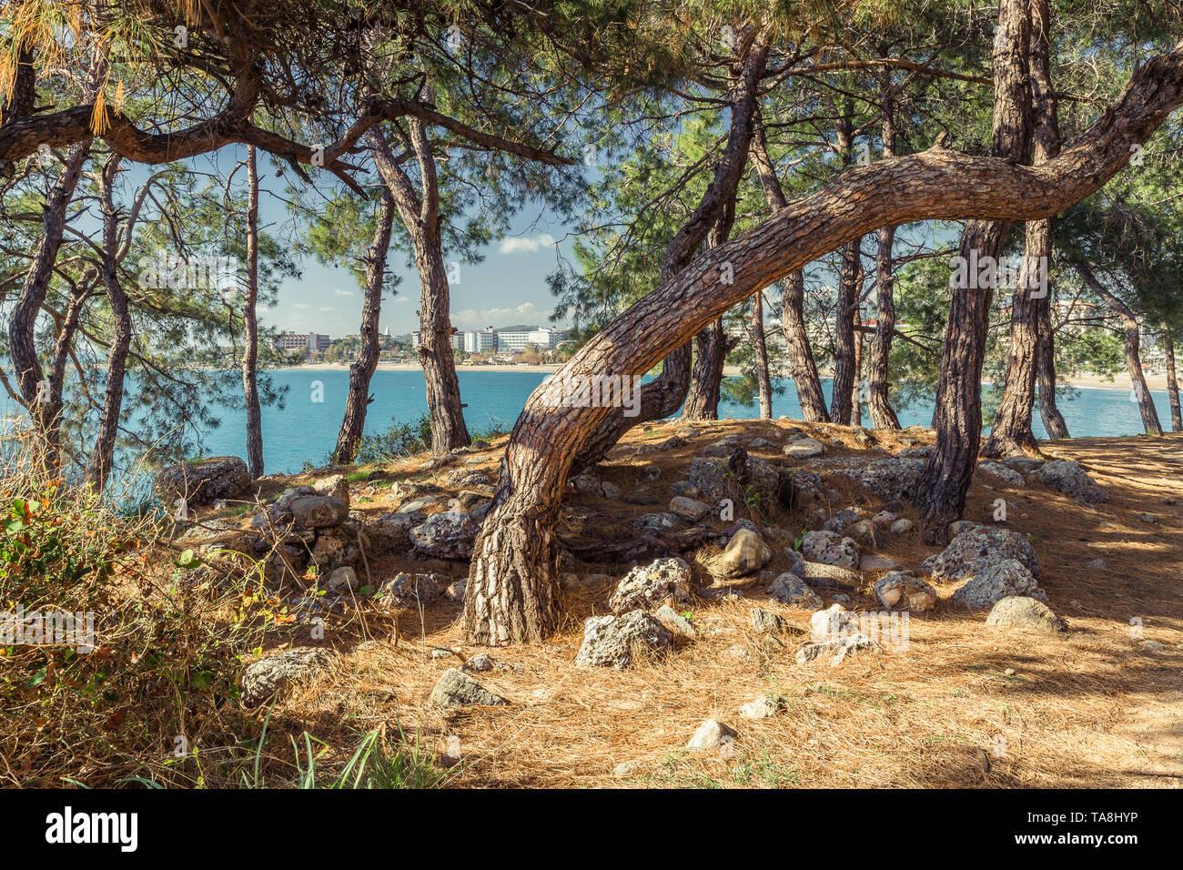Coniferous Mediterranean Forest in Turkey - Stock Image