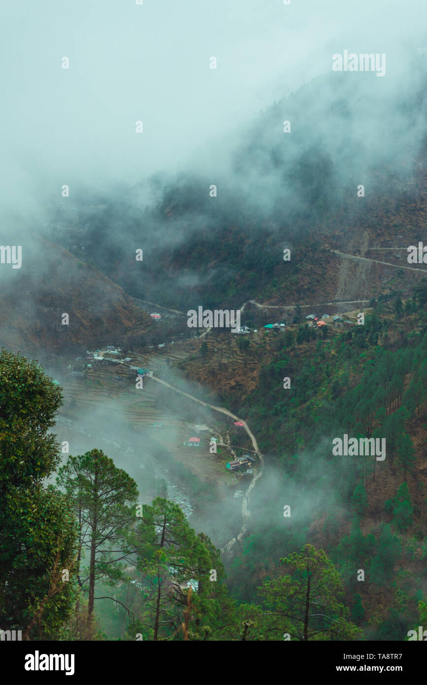 Sunset over deodar tree in himalayas - Beautifull Curvy road in mountains - Stock Image