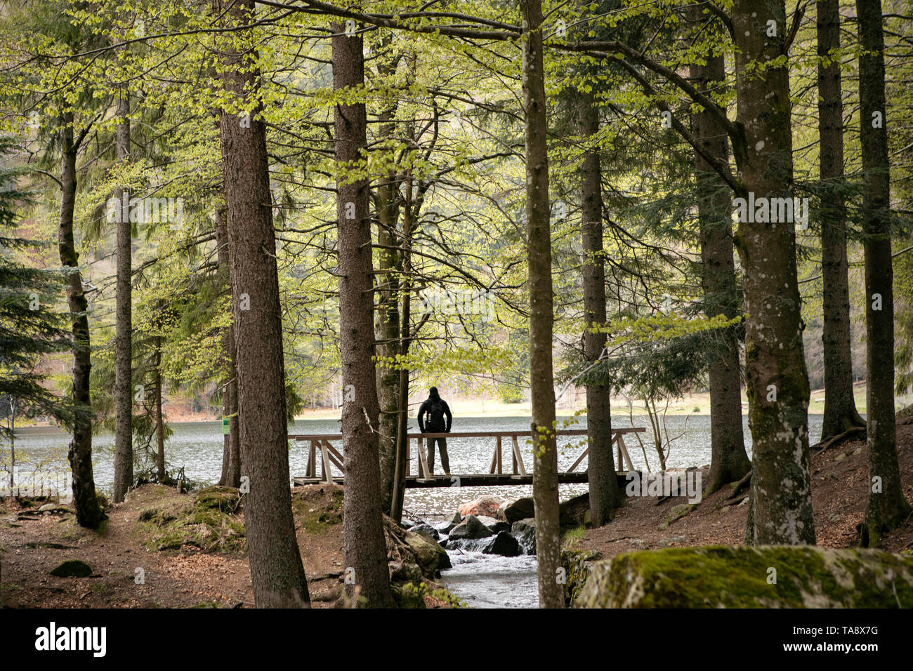 Dark silhouette of man standing on the wooden bridge in the forest. Mountain lake and stream. Hiking in forest. Natur park hiking trail. Black forest. - Stock Image