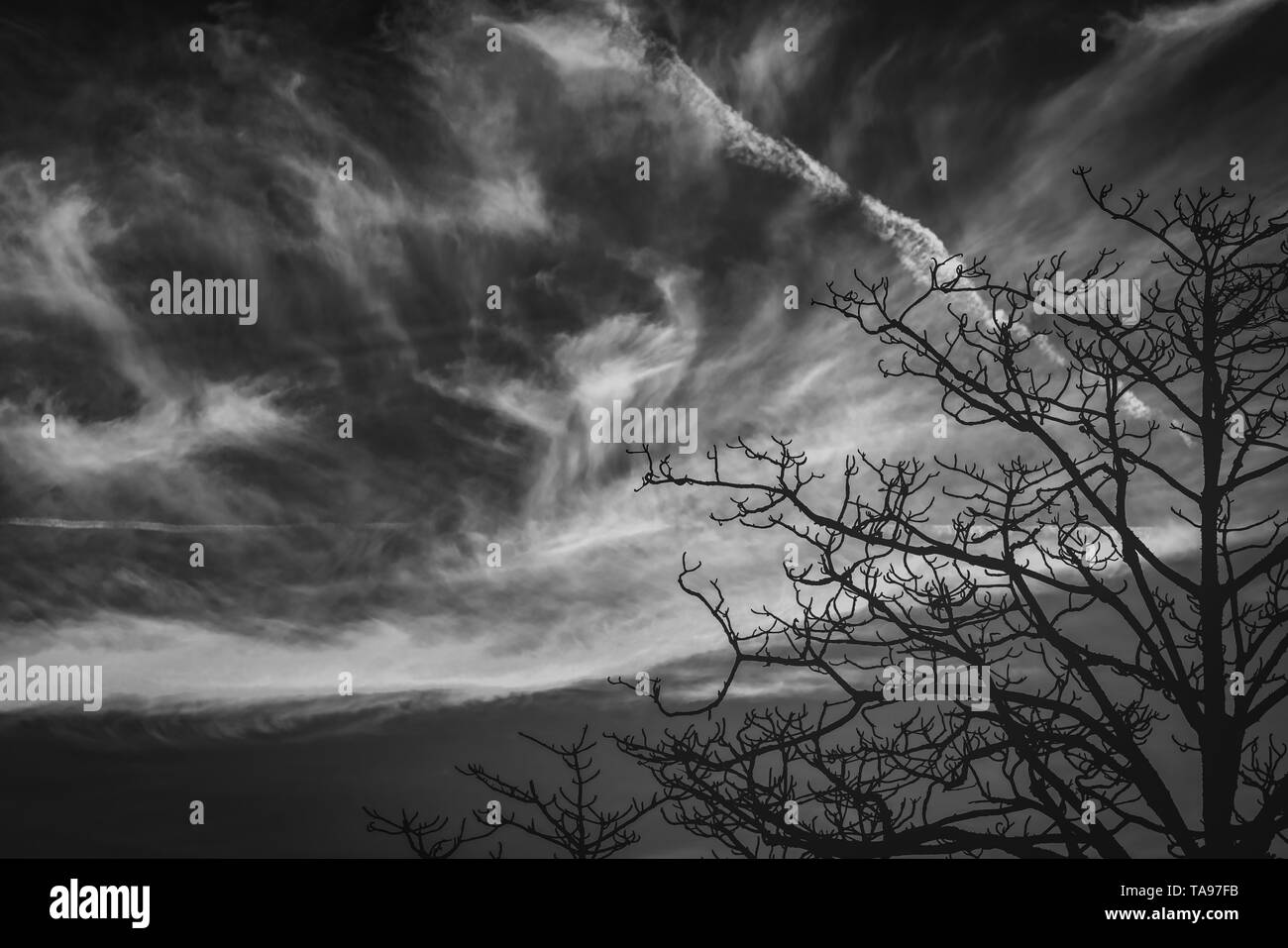 Silhouette leafless tree. Silhouette dead tree on dark dramatic sky and clouds background for scary or death. Halloween day background. Hopeless. - Stock Image