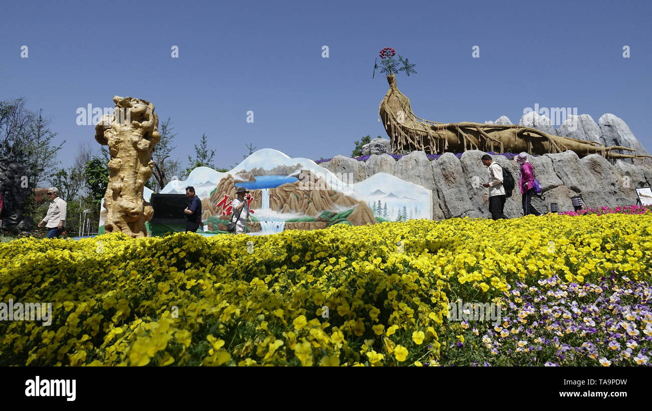 (190523) -- BEIJING, May 23, 2019 (Xinhua) -- Tourists visit the Jilin Garden at the Beijing International Horticultural Exhibition in Yanqing District of Beijing, capital of China, May 23, 2019. The expo kicked off its 'Jilin Day' event on Thursday. Activities will be held to demonstrate the province's geographic features and folk customs. (Xinhua/Li Xin) - Stock Image