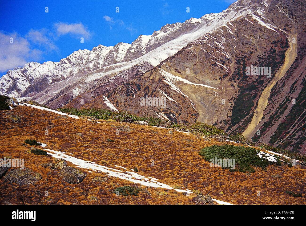 Fresh Snow Patches on Grassy Hills on Way to Pachhu Glacier (Uttarakhand). - Stock Image