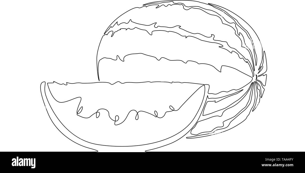 Continuous line drawing Watermelon or melon. Vector illustration. - Stock Image