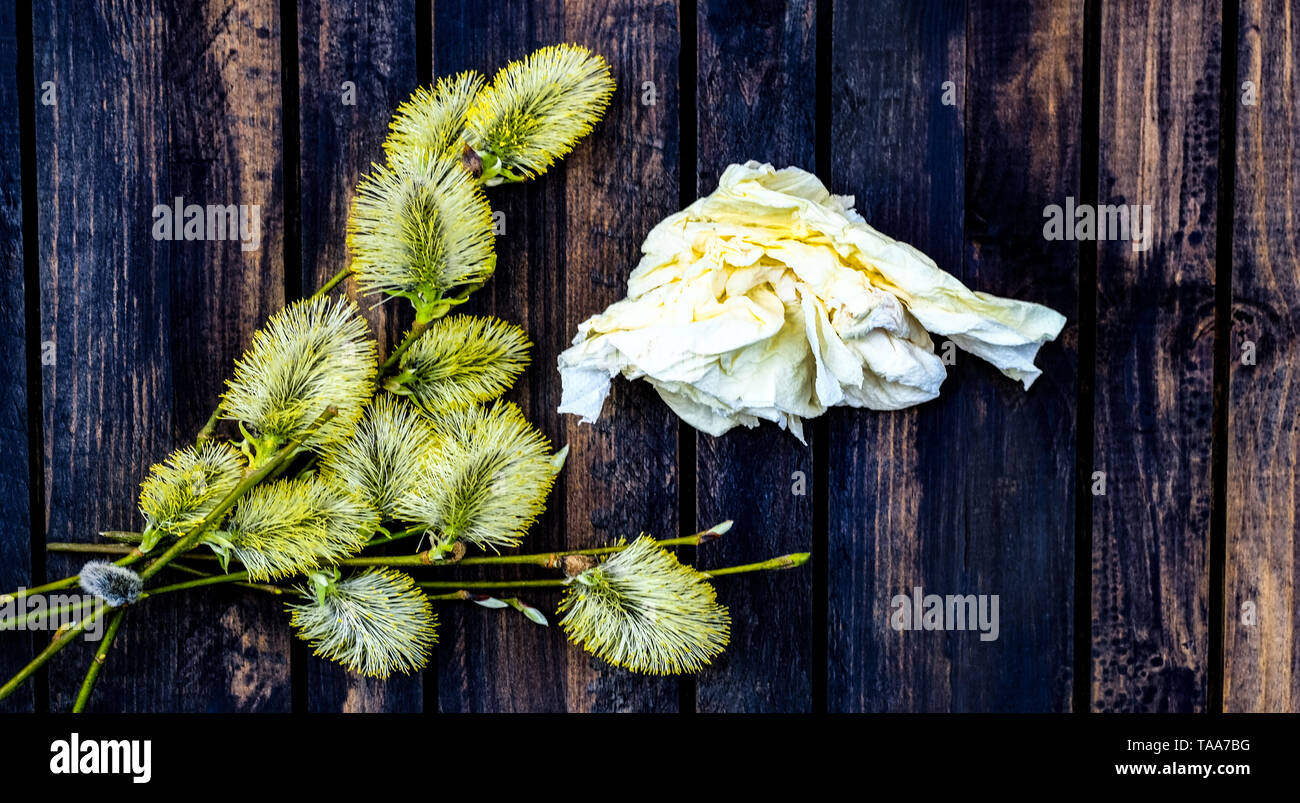 Pollen allergy and handkerchief on wooden table - Stock Image