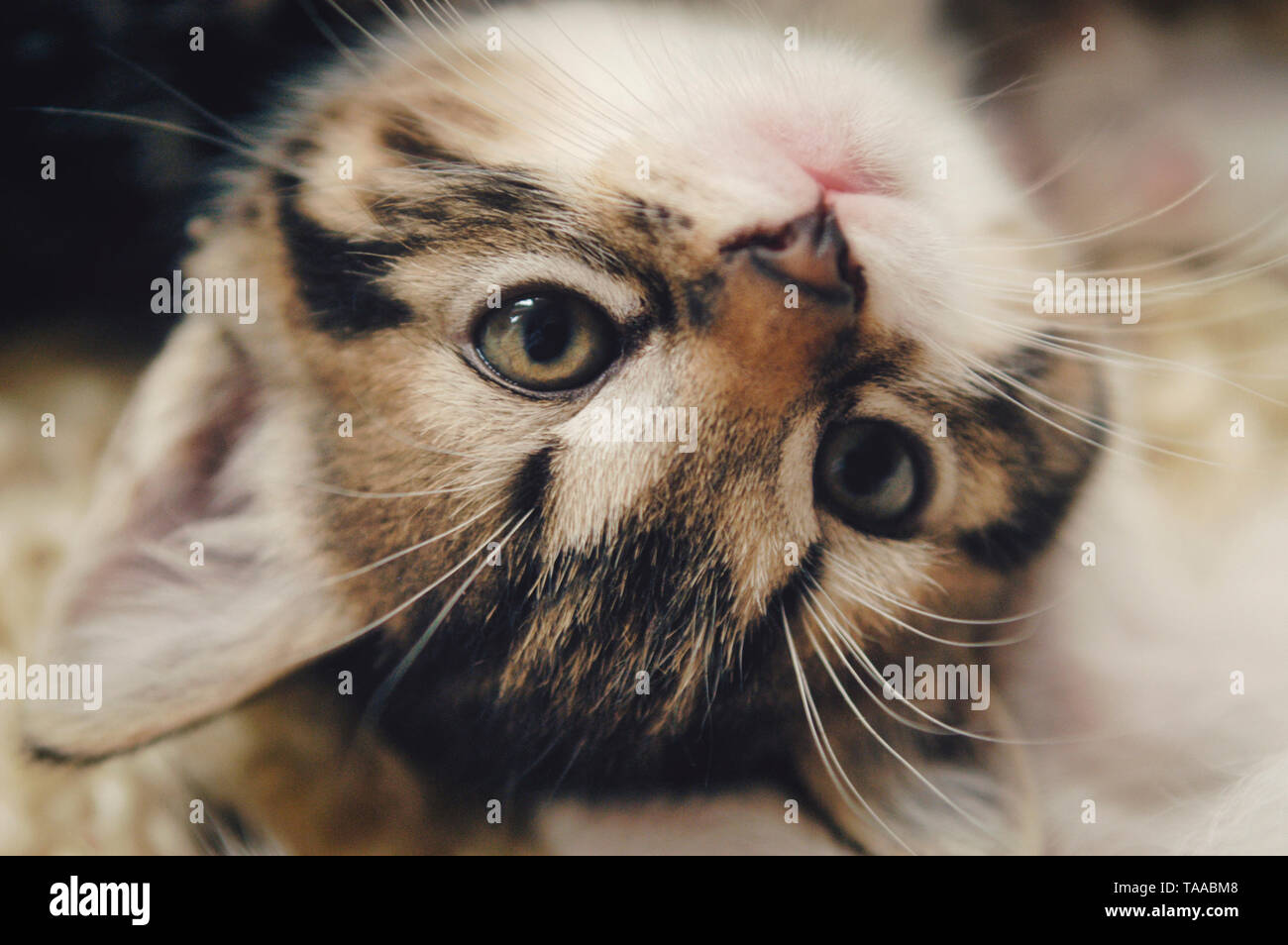 Cat Baby Face - Stock Image