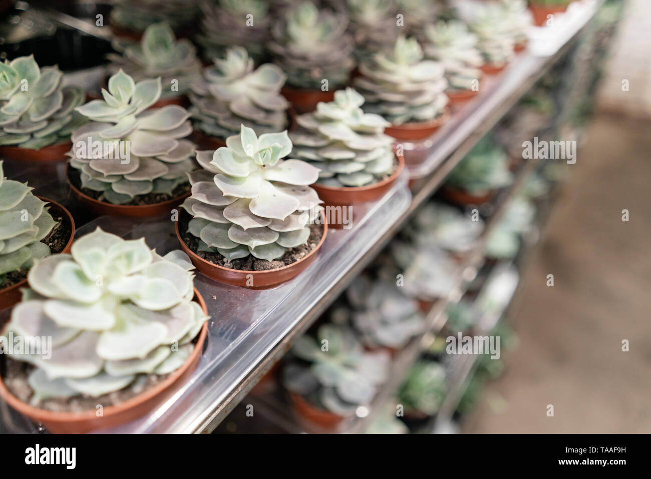 Garden center and wholesale supplier concept. Many different ...