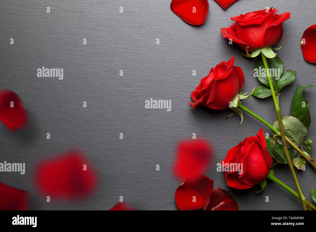 Red roses background with falling petals - Stock Image