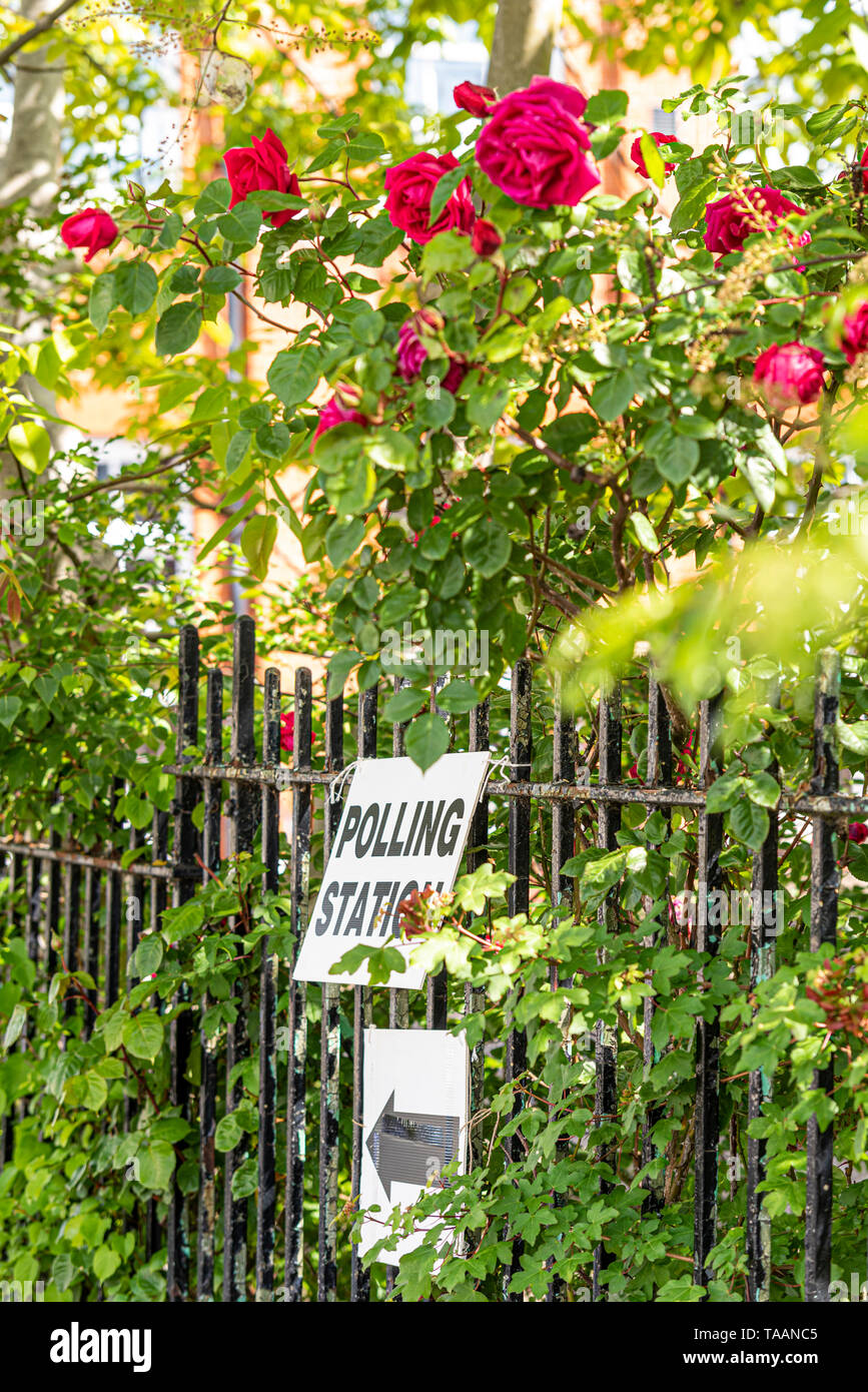 Polling station sign among the leaves and flowers of a red rose bush on a sunny day. European Parliament election 2019 voting day. Democracy. EU - Stock Image
