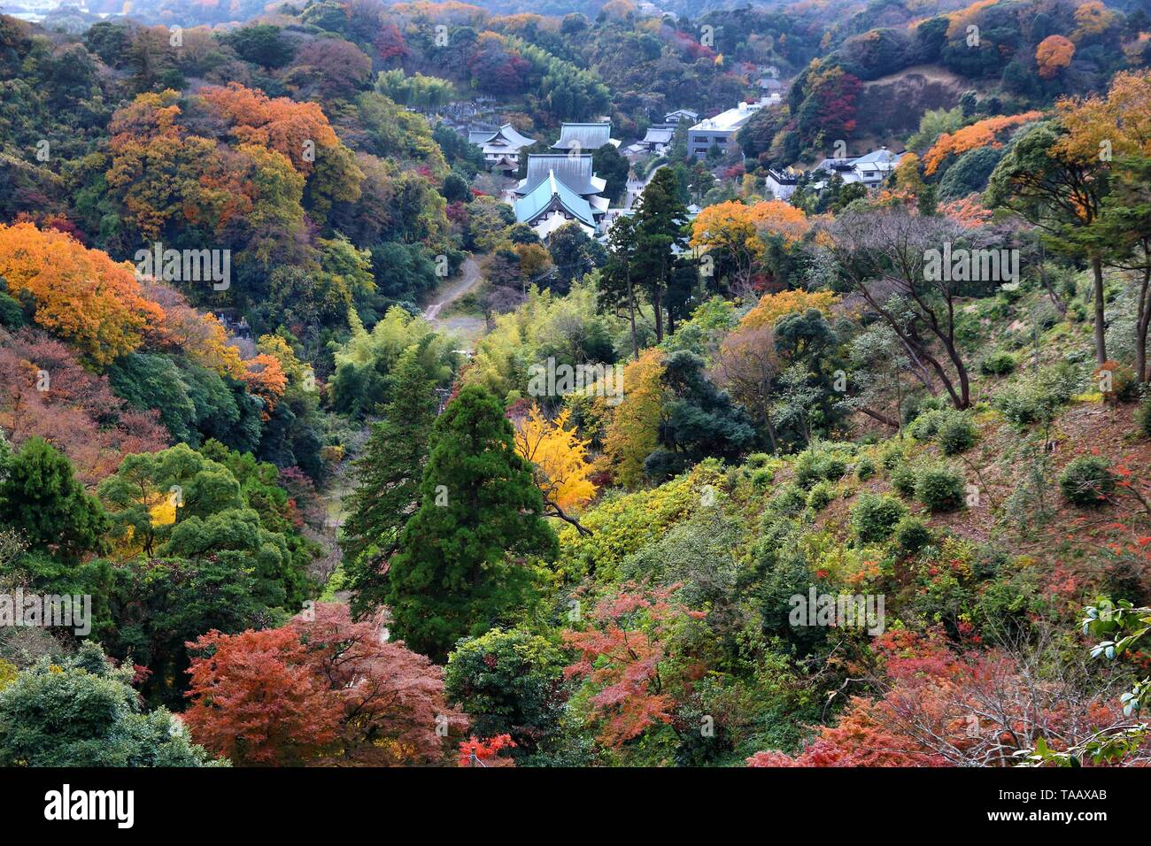 Kamakura, Japan - Zen Buddhist temple of Kencho-ji. Aerial view with autumn forests. - Stock Image