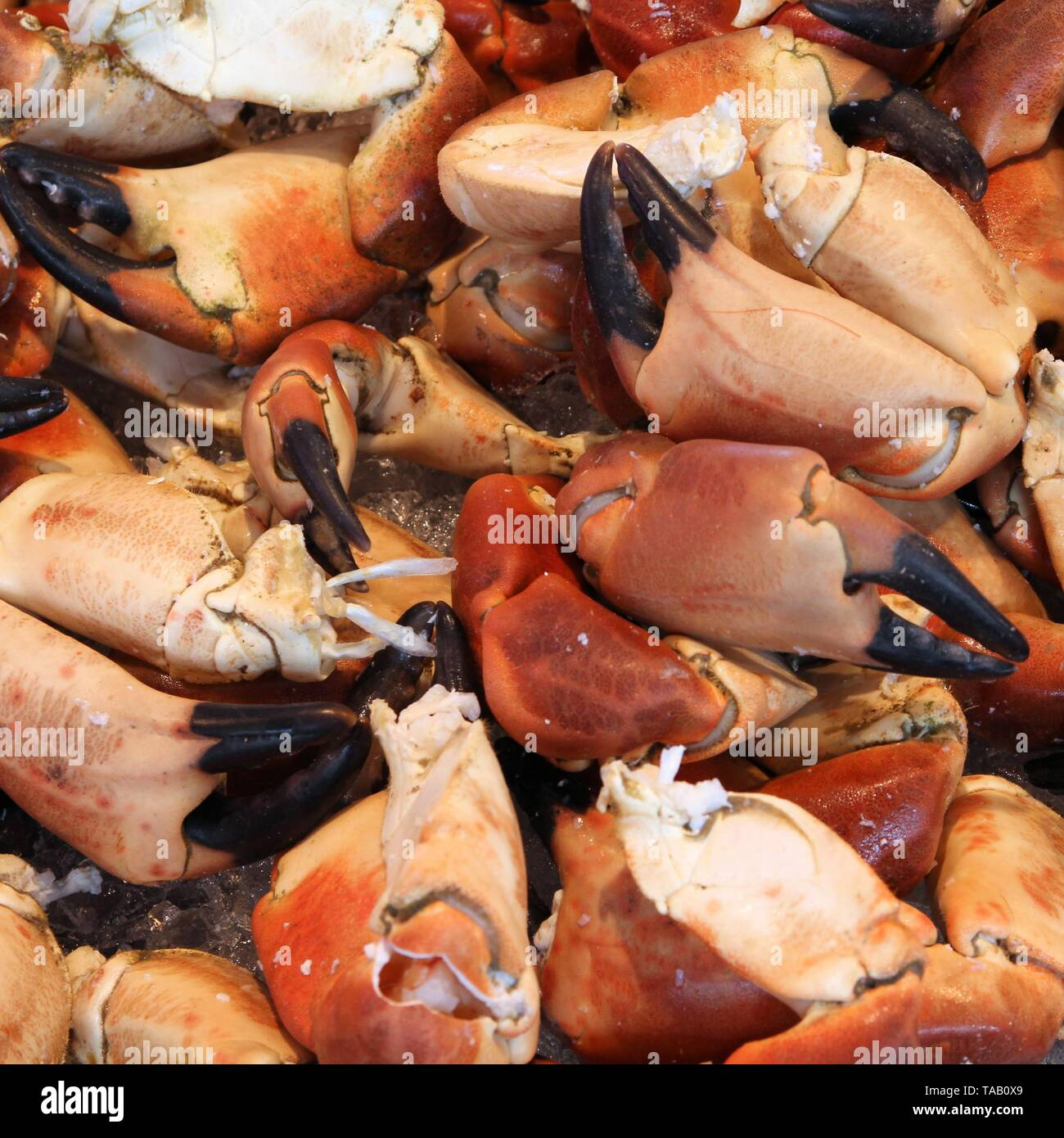 Crabs at famous fish market (Fisketorget) in Bergen, Norway. Square composition. - Stock Image