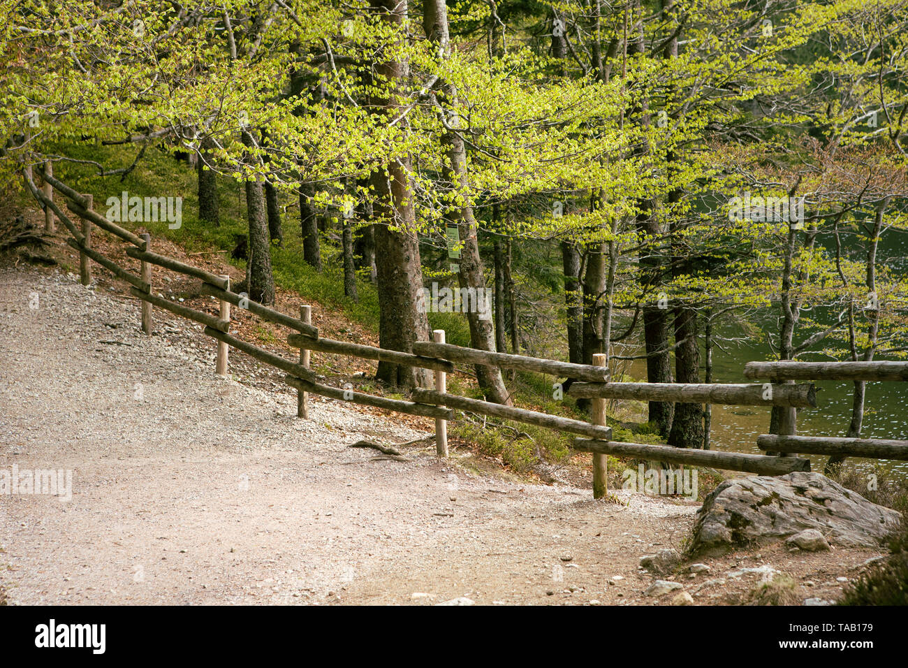 Path in wood in spring. Wooden fence in wild forest landscape. Mountain Hike trail. Deciduous trees. Nature park. Schwarzwald, Germany. Black forest. - Stock Image