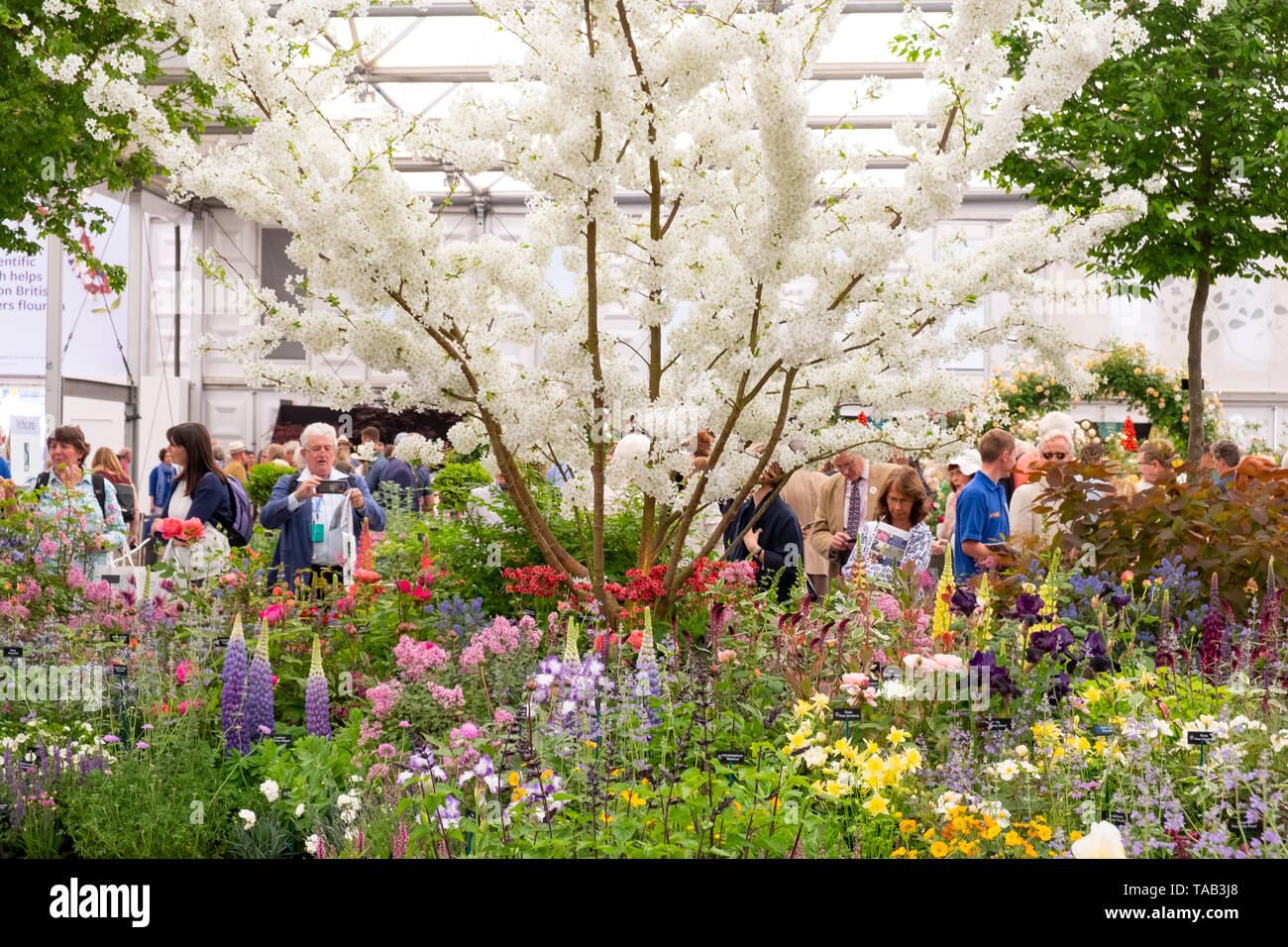 Visitors at the RHS Chelsea Flower Show 2019 around the Hillier Nurseries display in the Great Pavilion, London, UK Stock Photo
