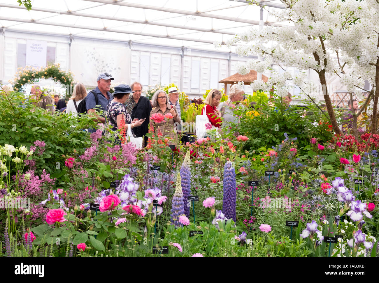 Visitors at the RHS Chelsea Flower Show 2019 around the Hillier Nurseries display in the Great Pavilion. London, UK Stock Photo