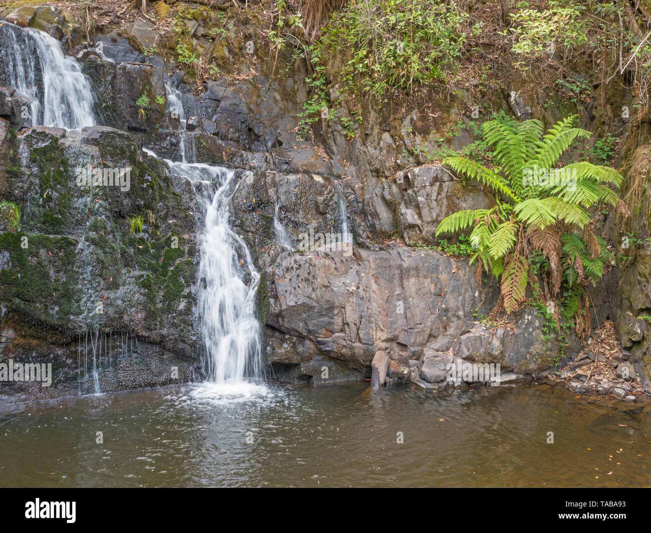 Lilydale Falls consists of two waterfalls near each other, in the Lilydale Falls Reserve near the township of Lilydale in Tasmania, Australia. Stock Photo