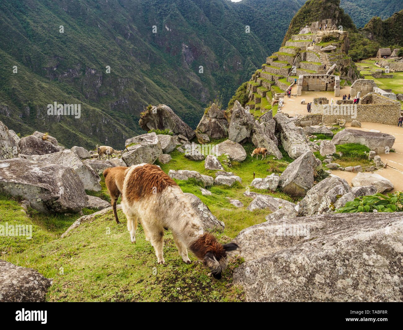 The lost Inca city of Machu Picchu in the Andes mountain range, Peru - Stock Image