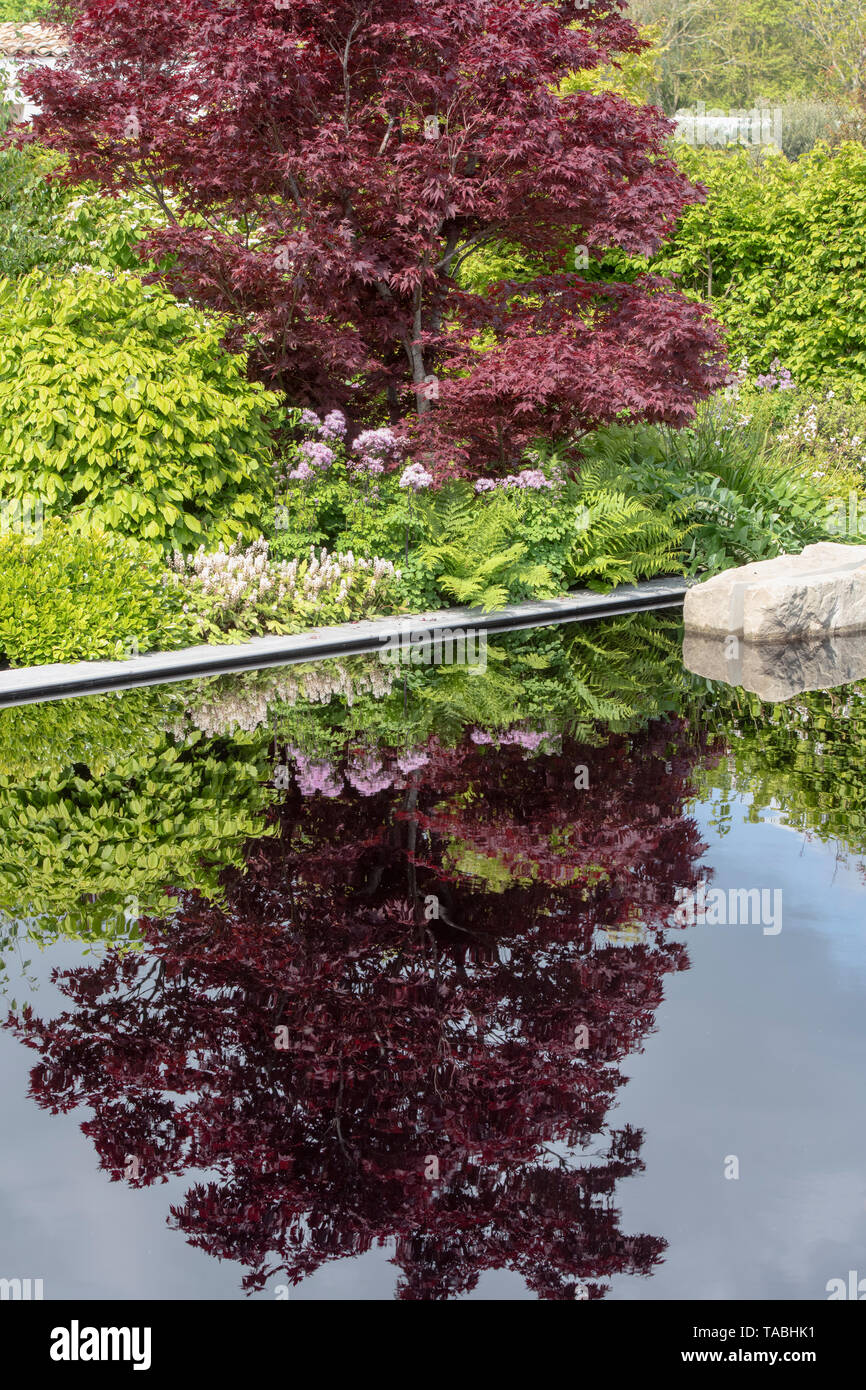 Acer tree reflecting in the The Leaf Creative Garden pond. A Garden of Quiet Contemplation at RHS Malvern spring show 2019, Worcestershire, England - Stock Image