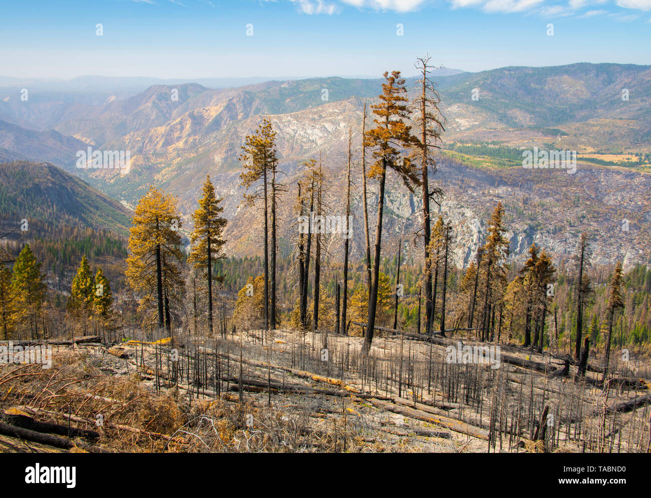 Aftermath of wild fires, Yosemite National Park, California, 2018, by Bill Lea/Dembinsky Photo Assoc - Stock Image