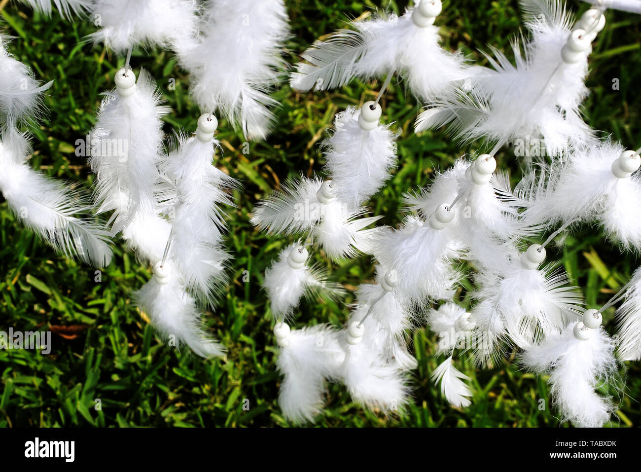 White feathers of a dove bird tied with leather string from dream catcher - Stock Image