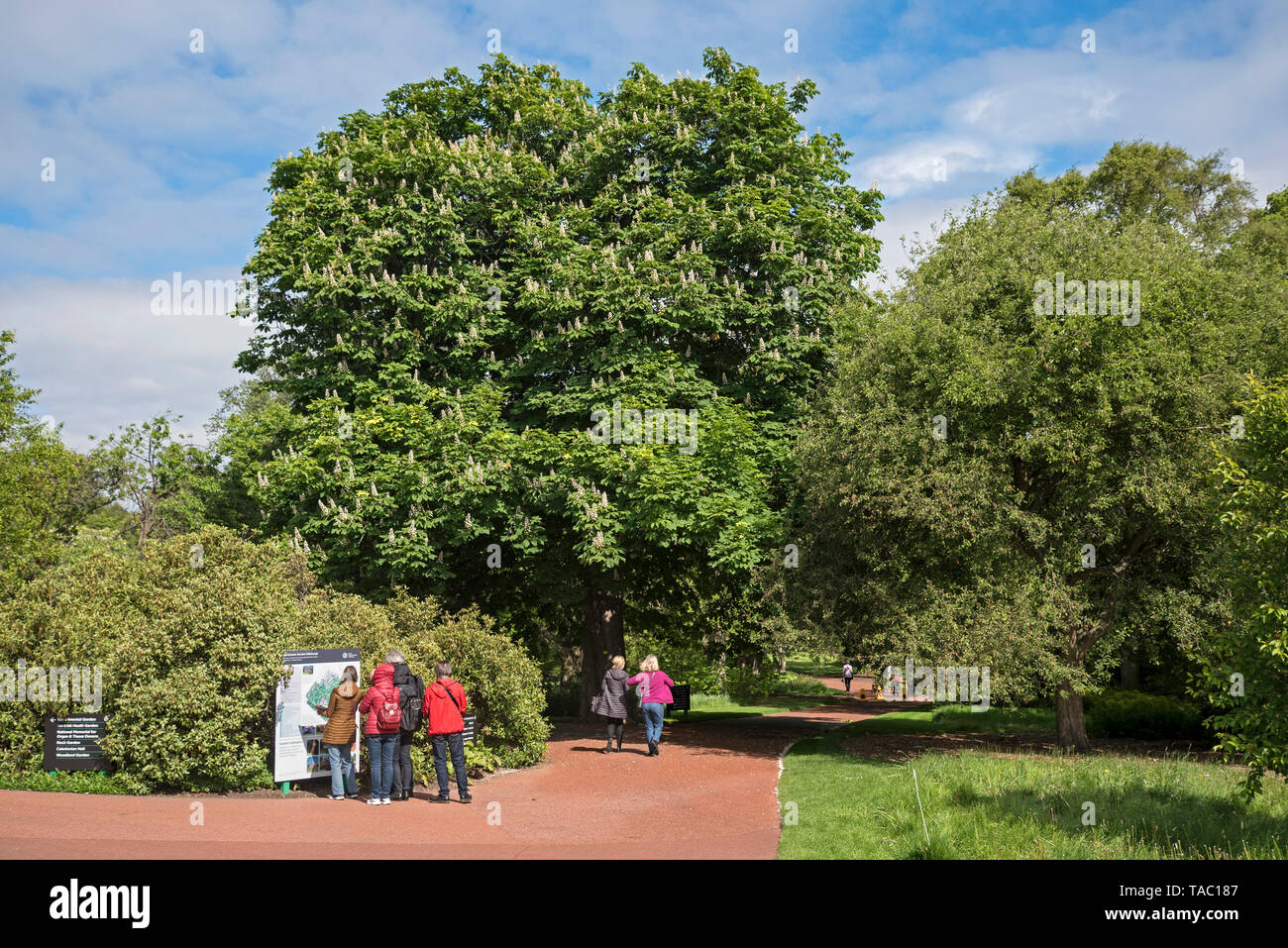 Visitors to the Royal Botanic Garden in Edinburgh consulting the noticeboard bnear the East Gate. - Stock Image