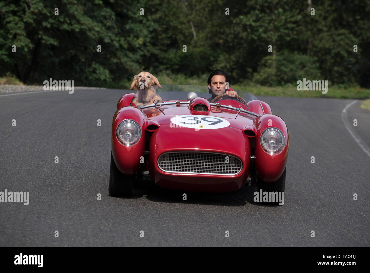 RELEASE DATE: August 9, 2019 TITLE: The Art of Racing in The Rain STUDIO: Twentieth Century Fox DIRECTOR: Simon Curtis PLOT: A dog named Enzo recalls the life lessons he has learned from his race car driving owner, Denny. STARRING: MILO VENTIMIGLIA as Denny Swift, Enzo. (Credit Image: © Twentieth Century Fox/Entertainment Pictures) Stock Photo