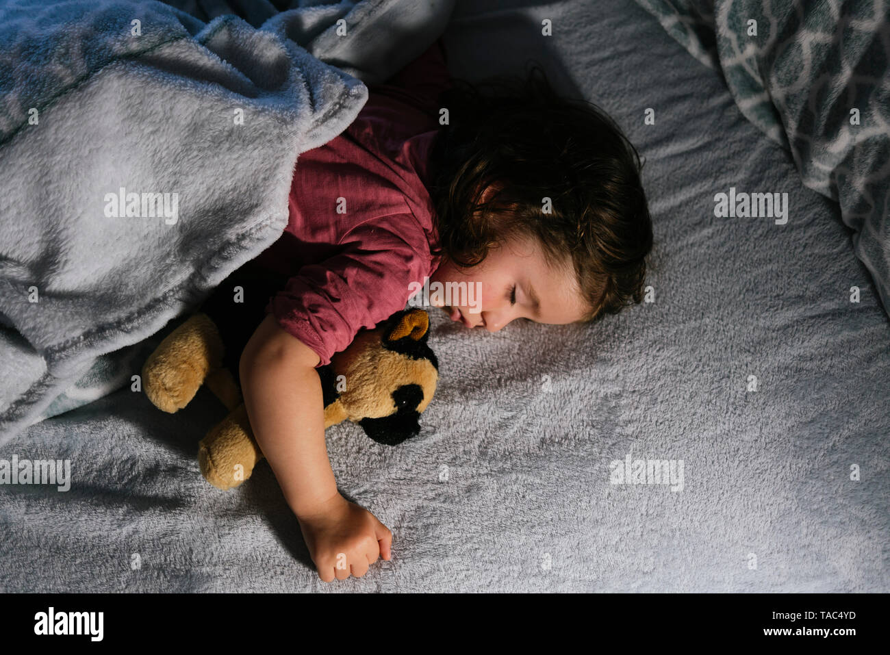Toddler girl sleeping in bed with a soft toy dog - Stock Image