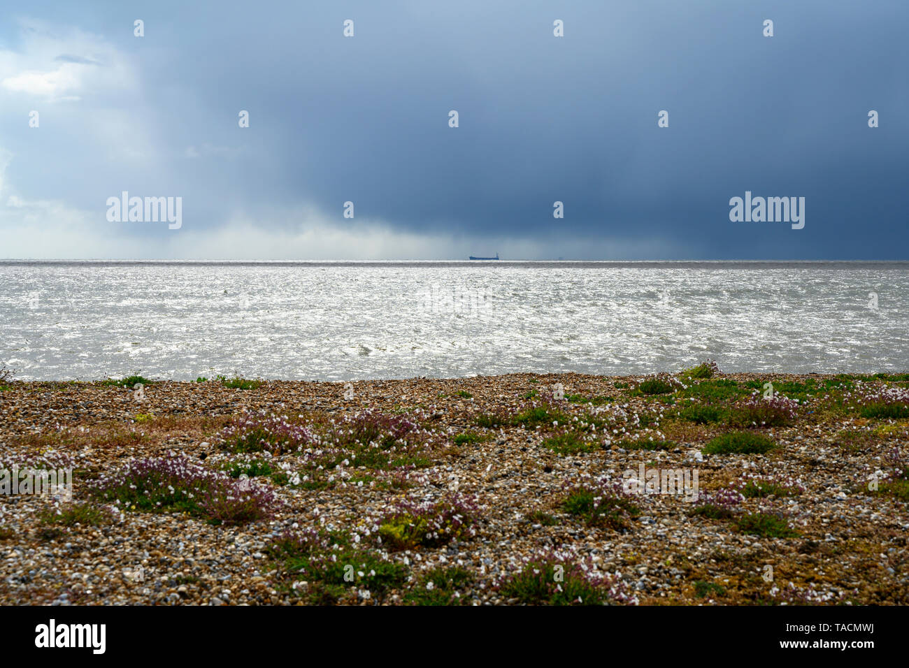 North Sea coast, Bawdsey, Suffolk, England. - Stock Image