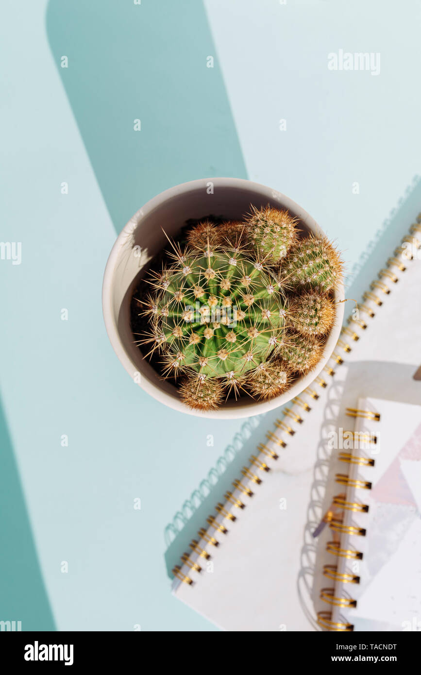 Creative workspace desk with notebook  pencil and cactus on soft blue background. Nobody Stock Photo