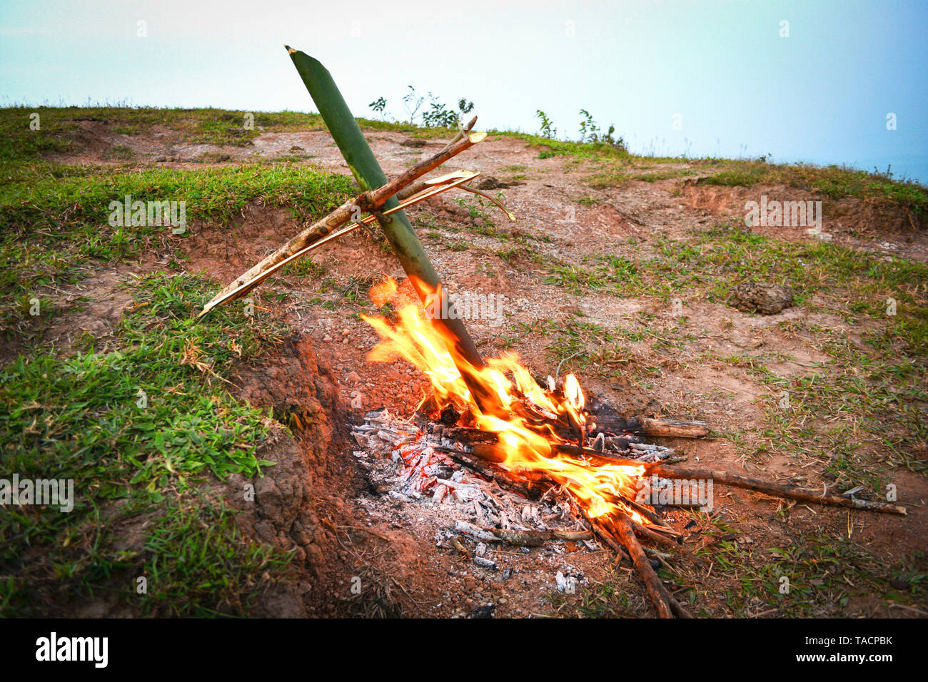 bamboo burn on fire for food boiled cooking nature / Survival the forest - Stock Image