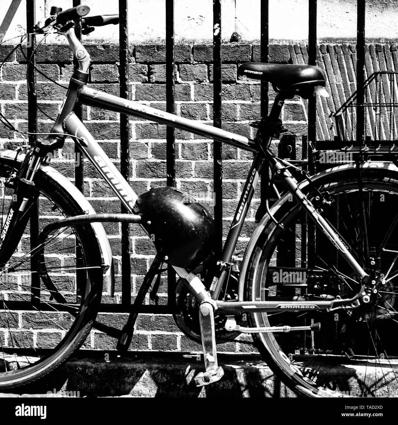 Bicycle Tied Onto a Steel of Iron Fence For Security To Prevent Theft In London - Stock Image