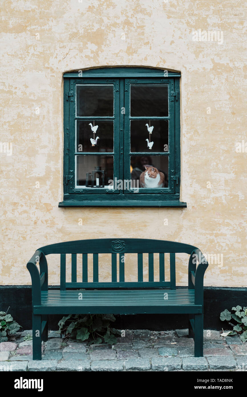 Denmark, Dragor, cat looking out of window of residential house - Stock Image