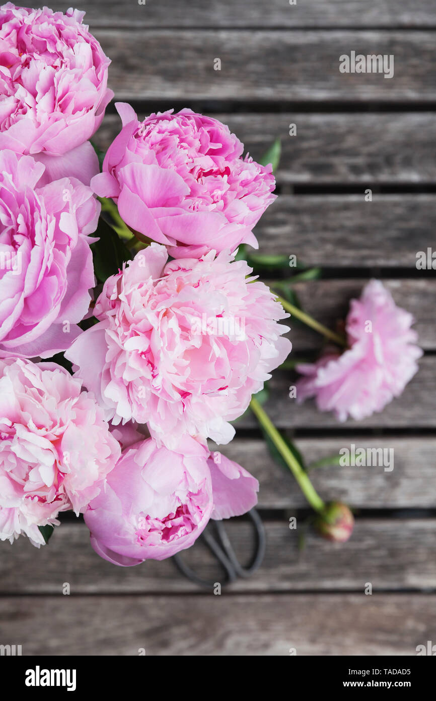 Peony bouquet with pruner on garden table - Stock Image