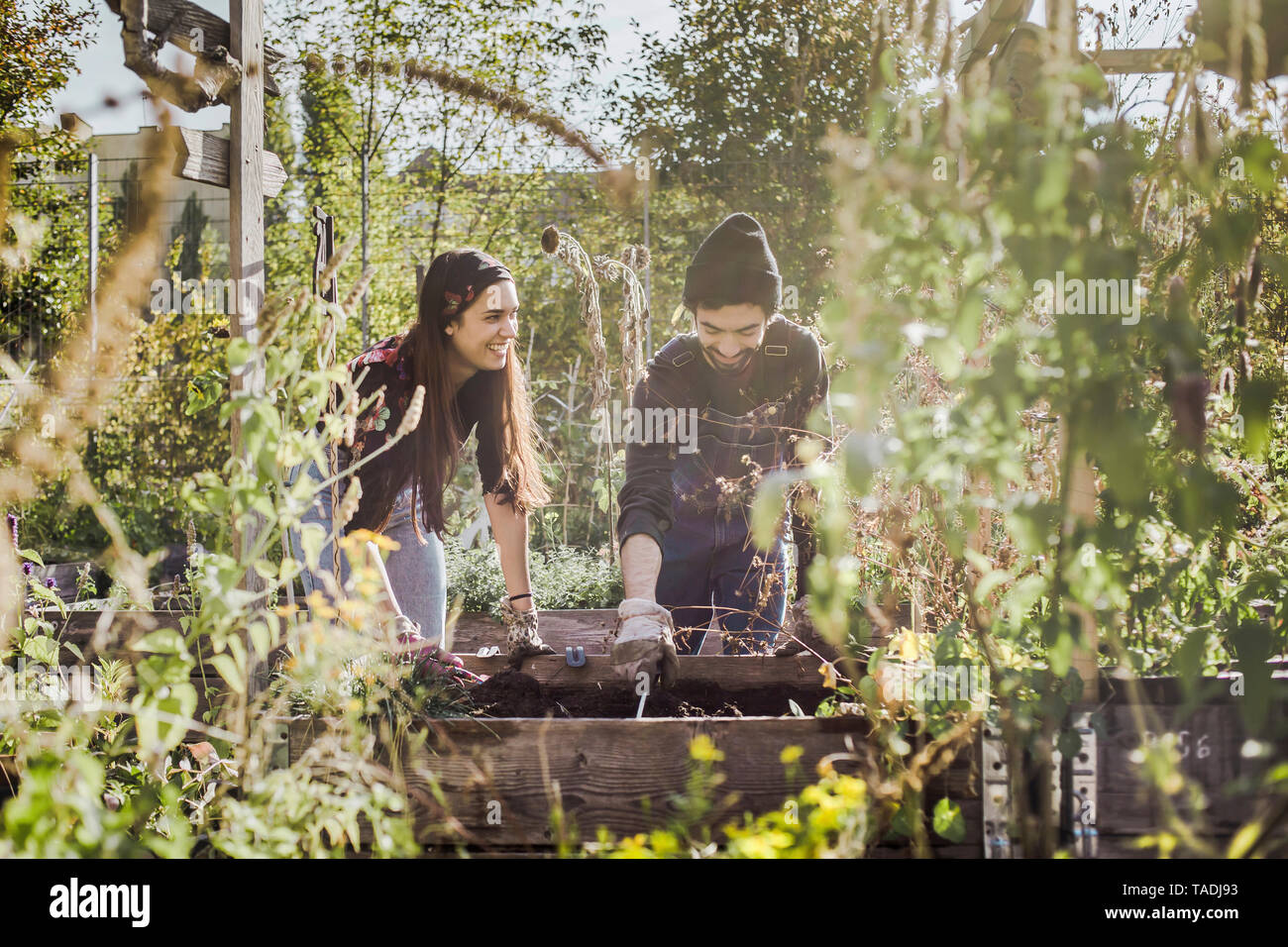 Happy couple gardening in urban garden together - Stock Image