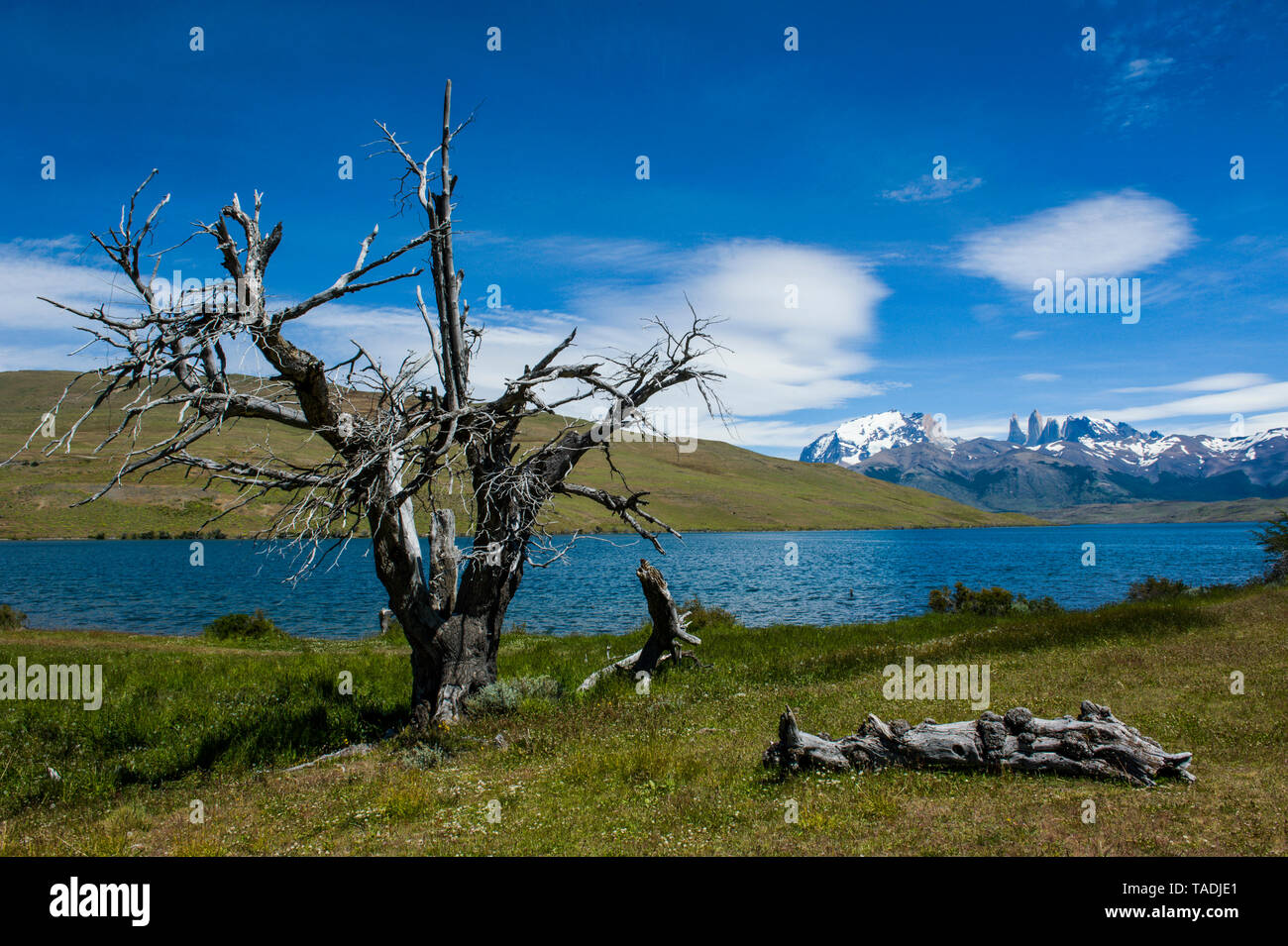 Chile, Patagonia, Torres del Paine National Park, glacier lake with mountains in background - Stock Image