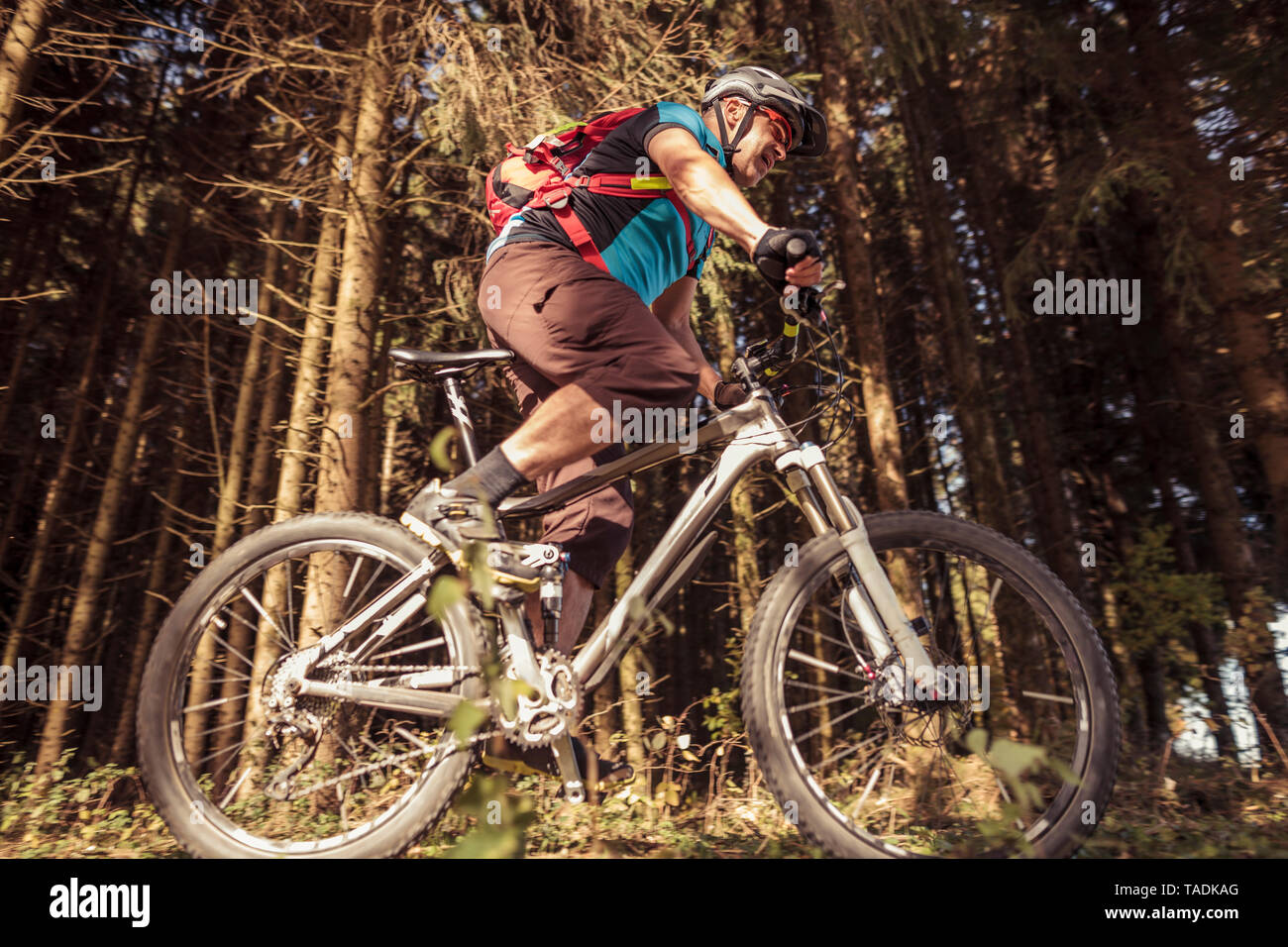 Man riding mountainbike on forest track - Stock Image