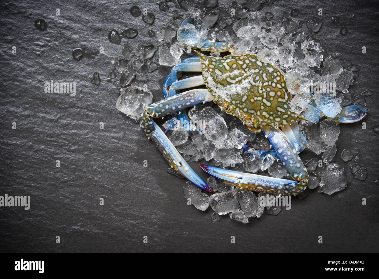 Seafood crab on ice / Fresh raw Blue Swimming Crab ocean gourmet with ice on dark background in the restaurant - Stock Image