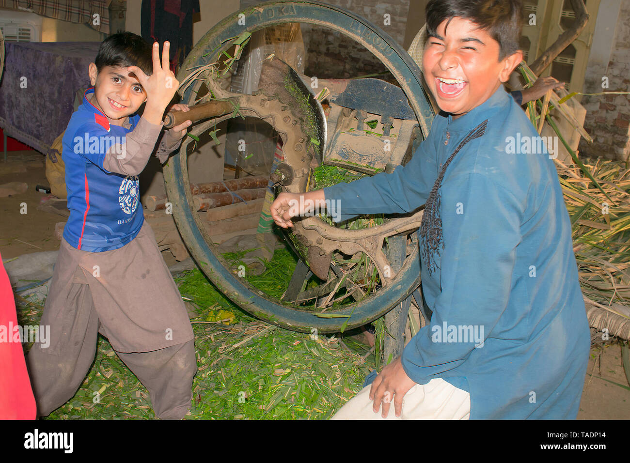rahim yar khan,punjab,pakistan-jan 21,2019:two young boys cutting grass on a old fashion machine in a very funny way. - Stock Image