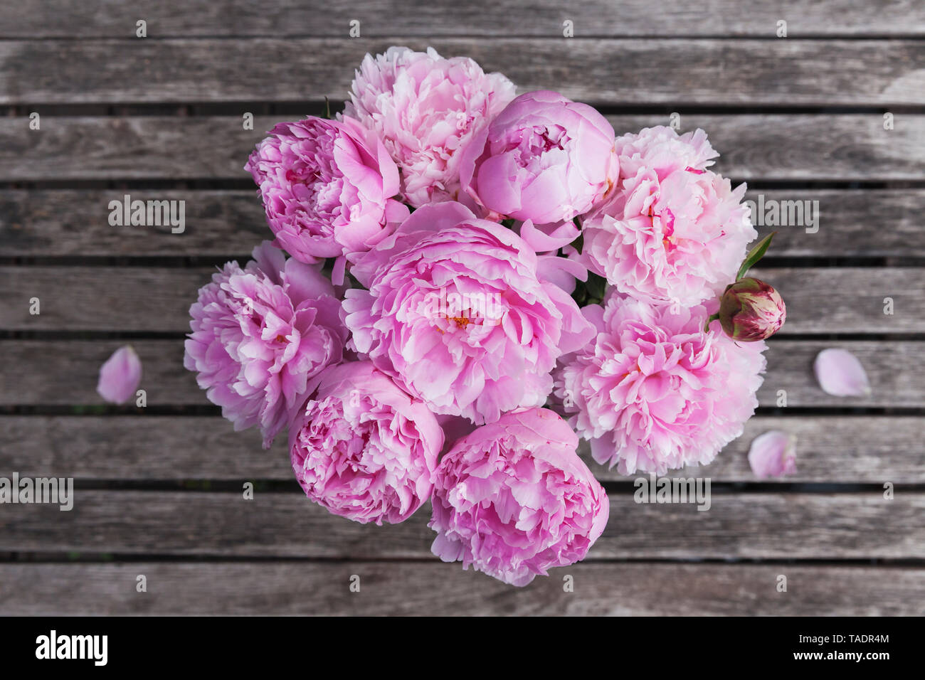 Pink peony bouquet on garden table - Stock Image
