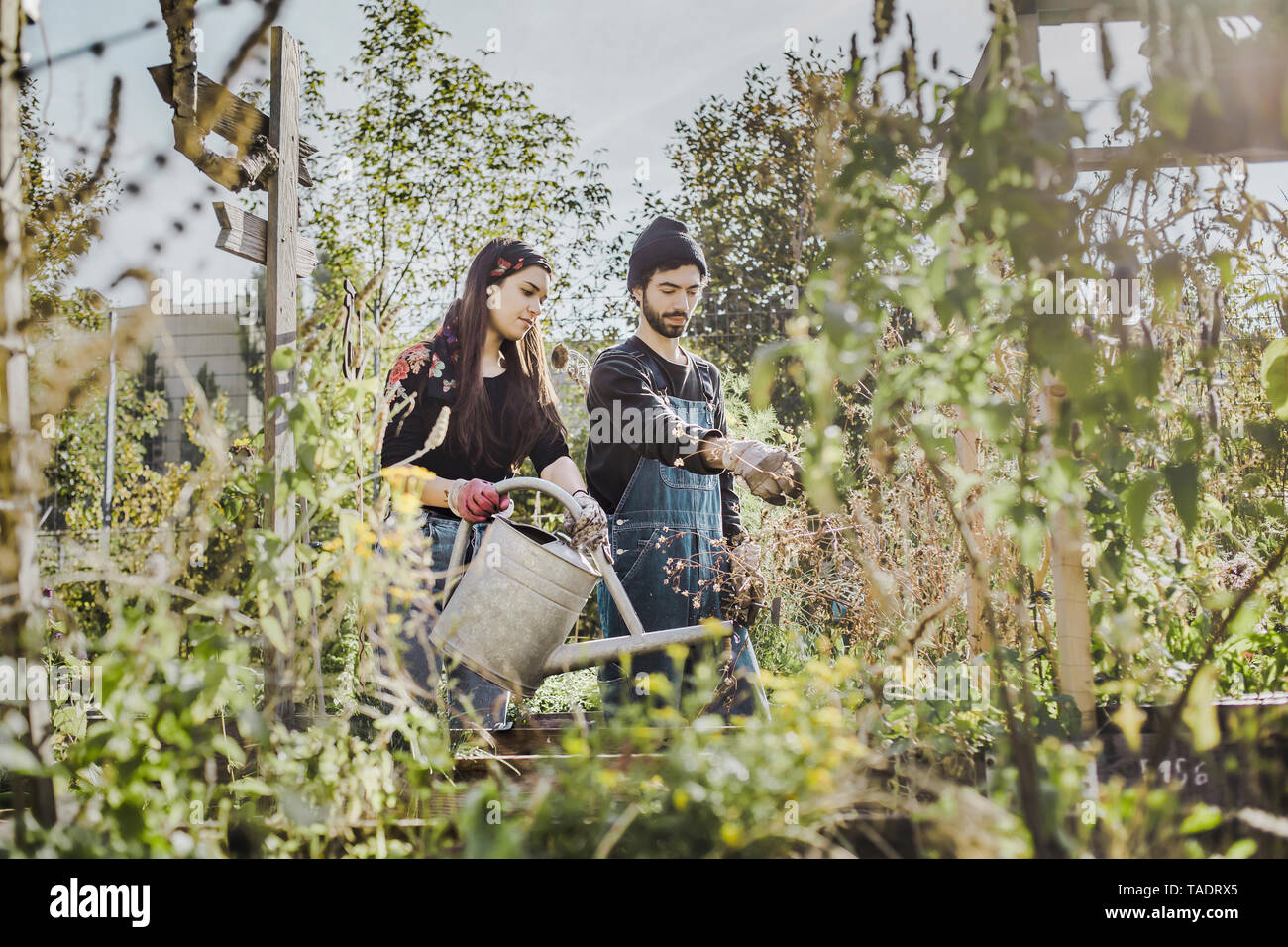 Couple gardening in urban garden together - Stock Image
