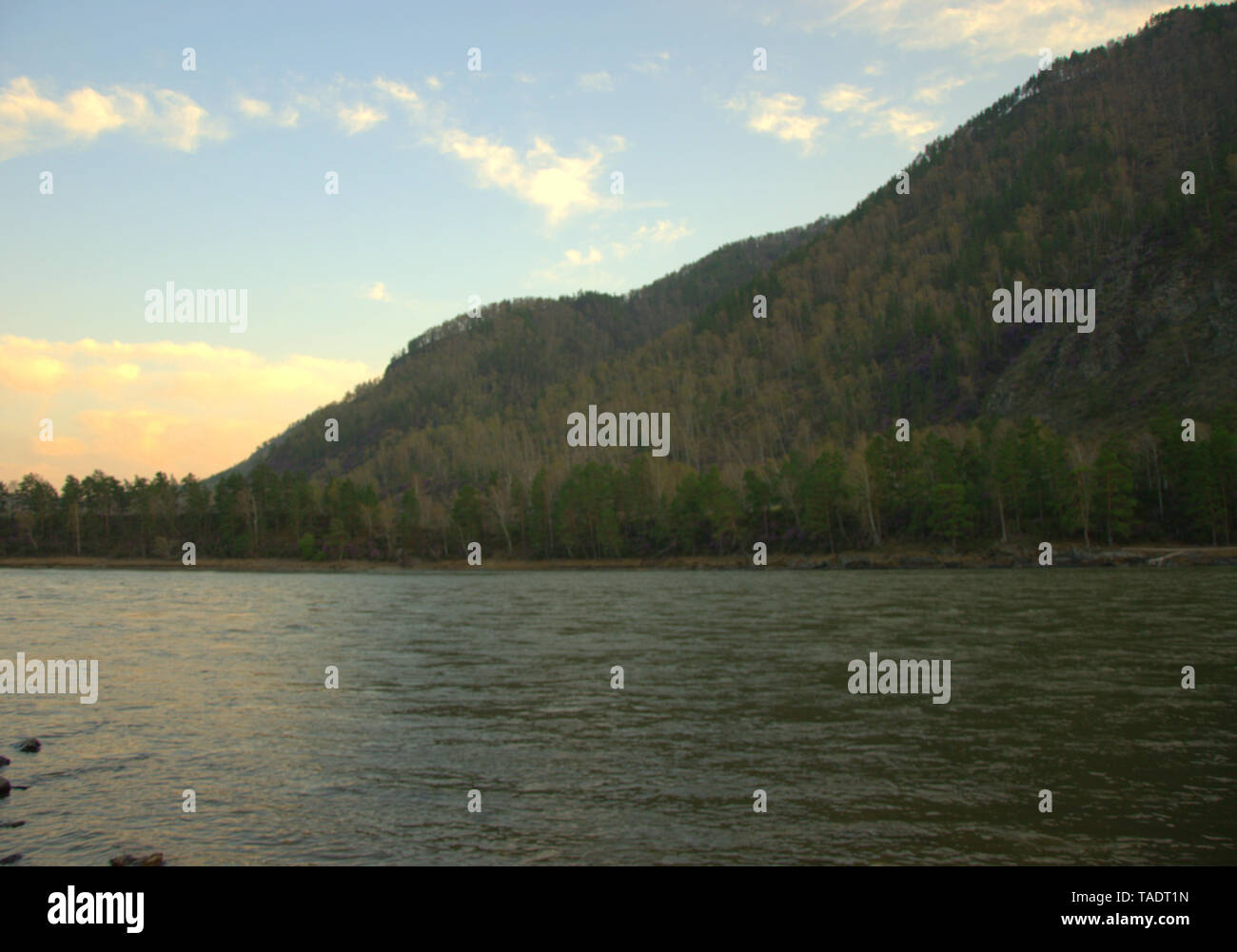 Katun, mountain river carrying its turquoise waters, shot at sunset. Altai, Siberia, Russia - Stock Image