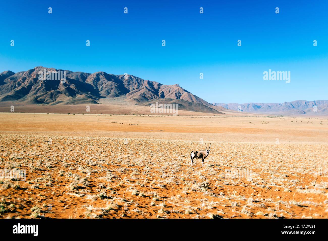 An antilop in Africa in desert - Stock Image