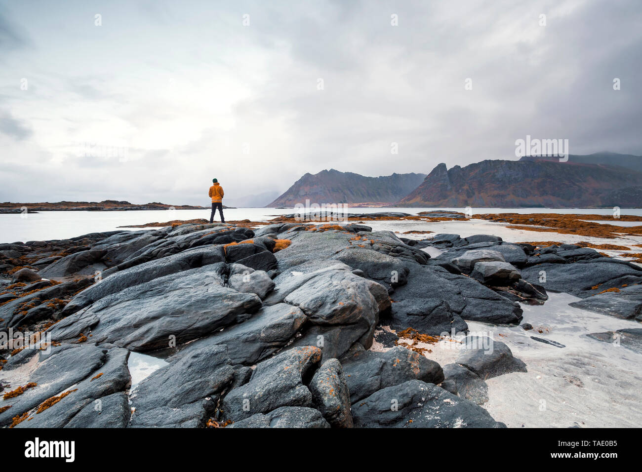 Norway, Lofoten Islands, Gimsoysand, man standing at rocky coast - Stock Image
