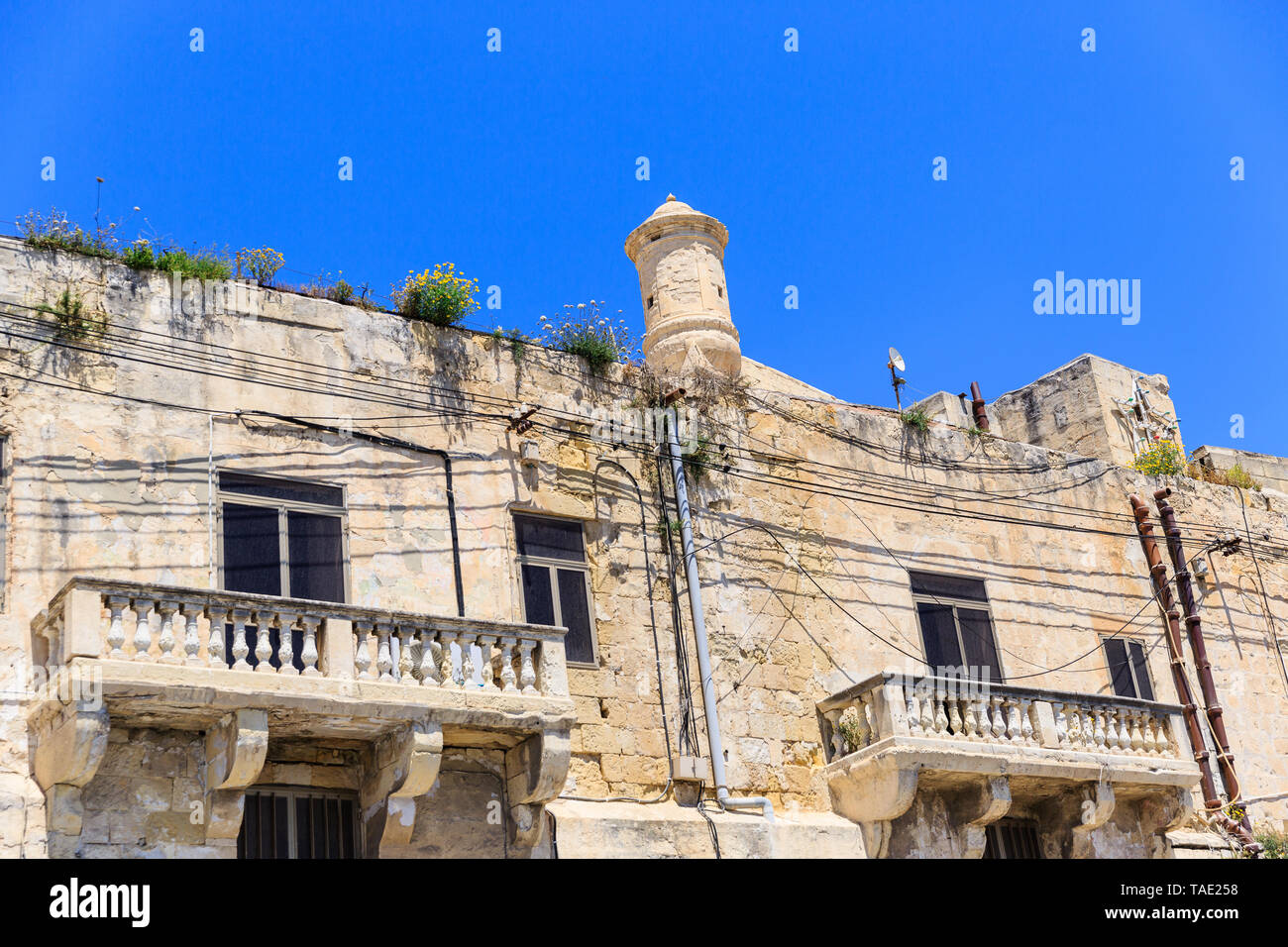 Beautiful typical maltese balcony in sandstone building overgrown with grass - Stock Image