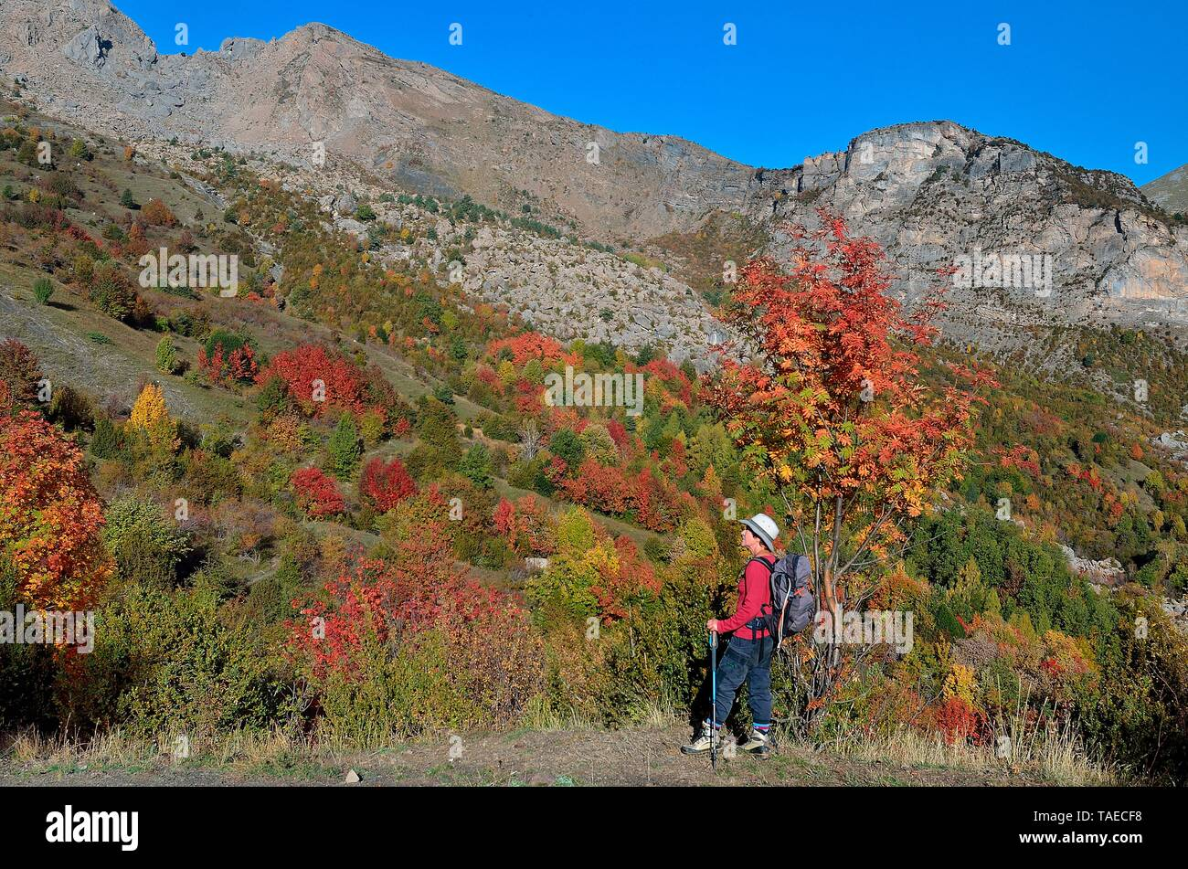 Colors of autumn in the Tena Valley, Huesca, Pyrenees, Aragon, Spain Stock Photo