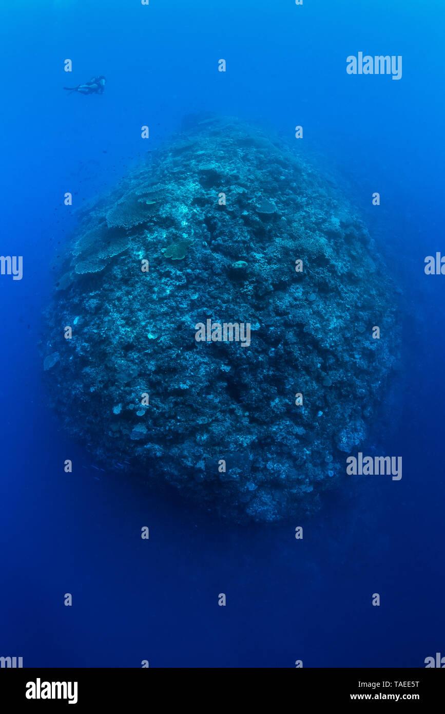 Tara Pacific expedition - november 2017 Diver: Jonathan Lancelot, Tara dive operator and hyperbaric chief, D: 15 m Outer reef, near Banban Island Reef - Stock Image