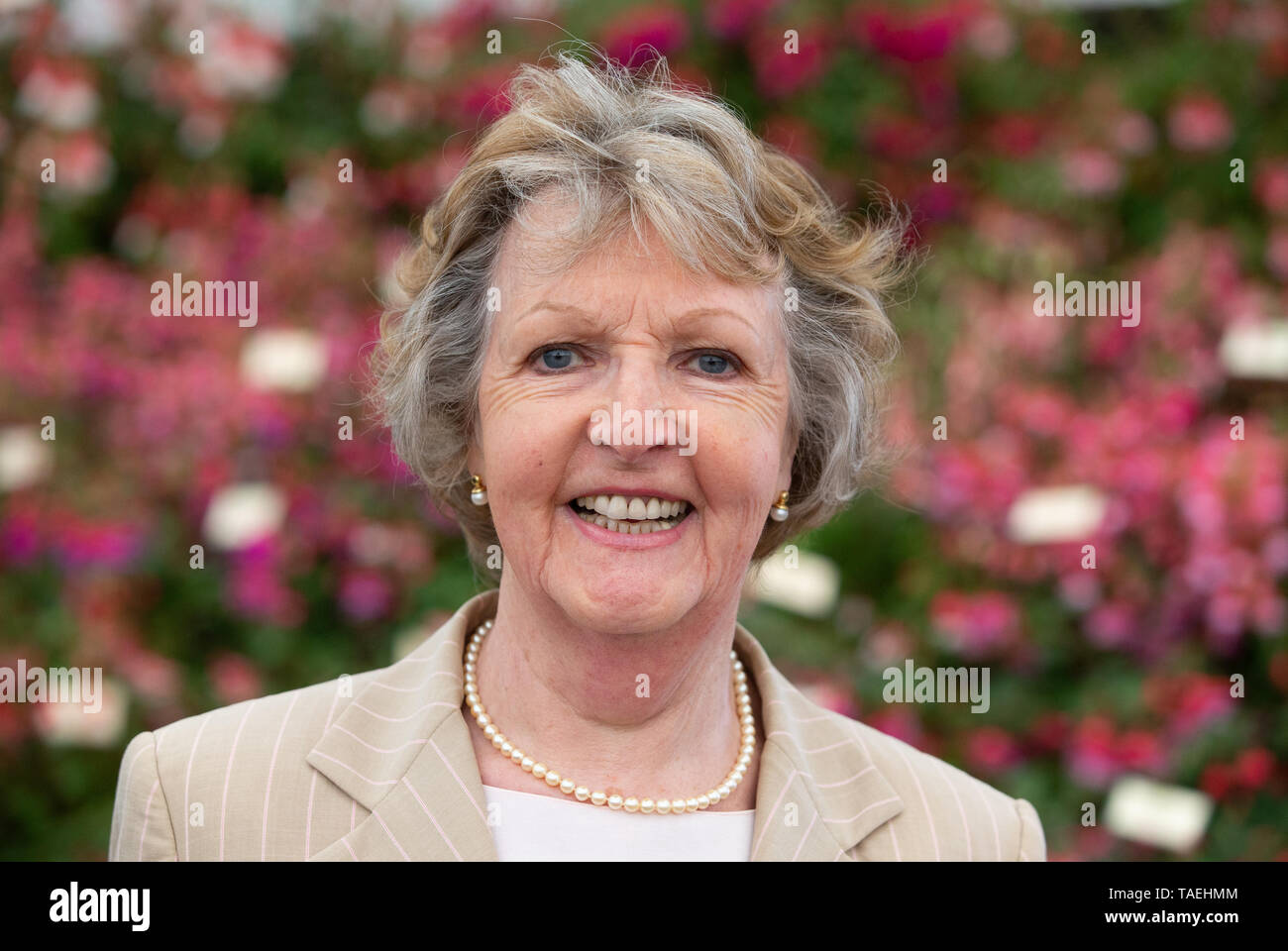 Stage and Television actress Penelope Keith at the RHS Chelsea Flower Show. She is best known for 'The Good Life' and 'To the Manor born'. - Stock Image
