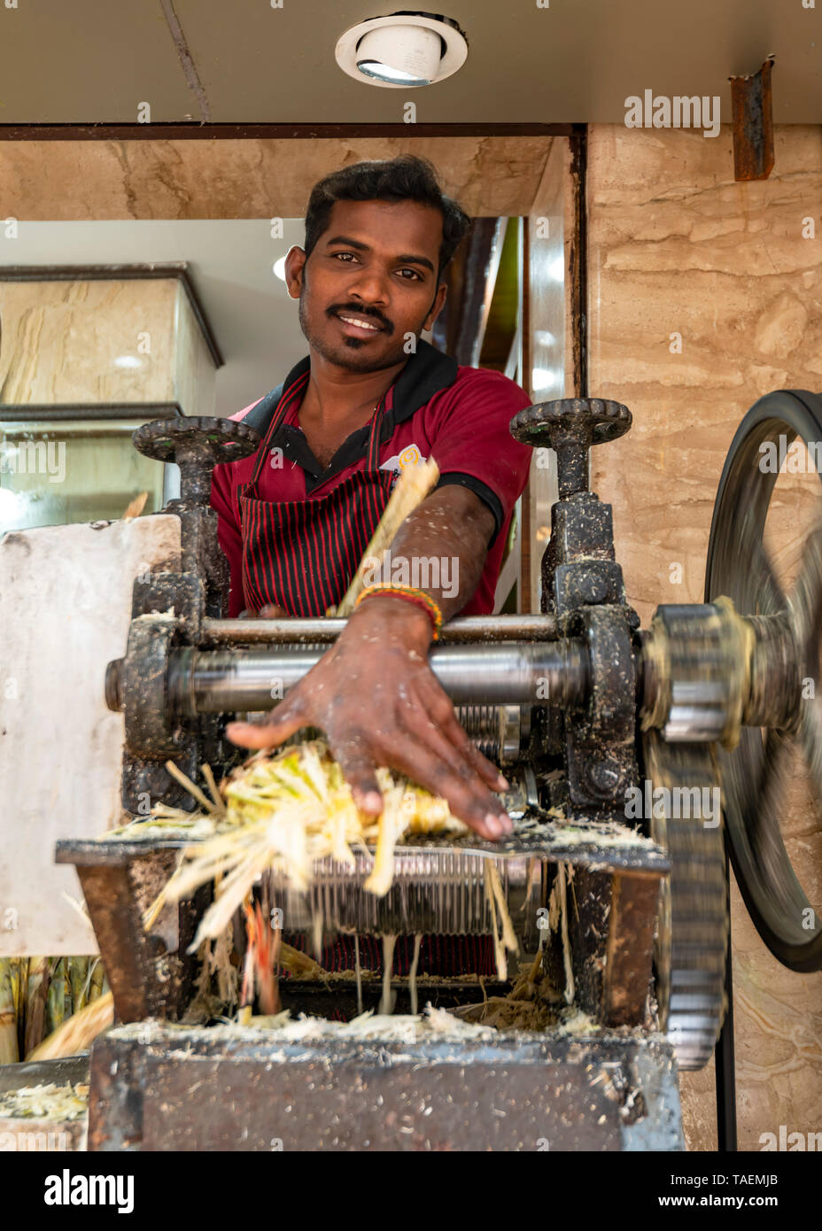 vertical-portrait-of-a-man-using-a-mangle-to-extract-sugarcane-juice-in-india-TAEMJB.jpg